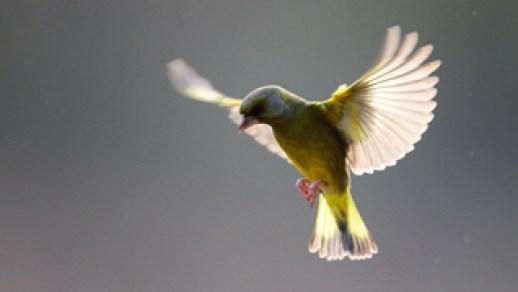 oiseau photographie