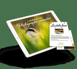 Les 5 problèmes du photographe animalier débutant