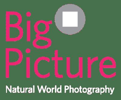 Bigpicture nature