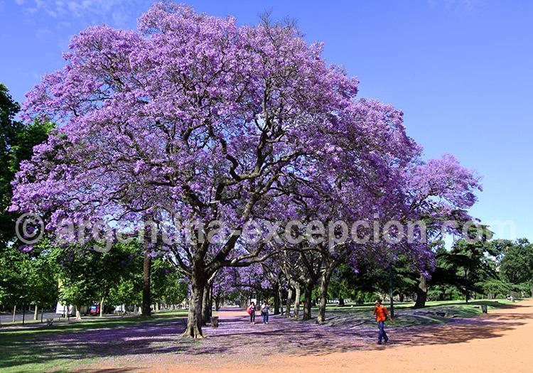 Jardin Palermo Argentine Buenos Aires