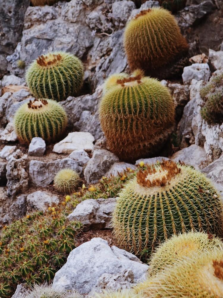 cactus jardin exotique monaco