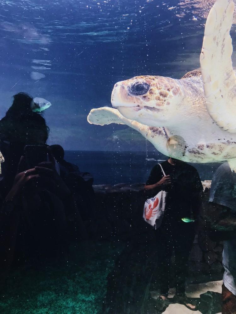 tortues musee oceanographique monaco