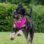 Airmesh Dog Harness In Hot Pink