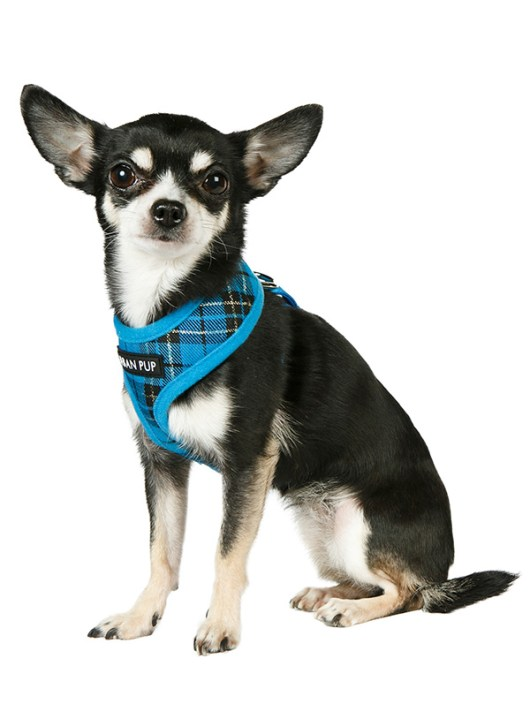 Blue-Tartan-Dog-Harness-4