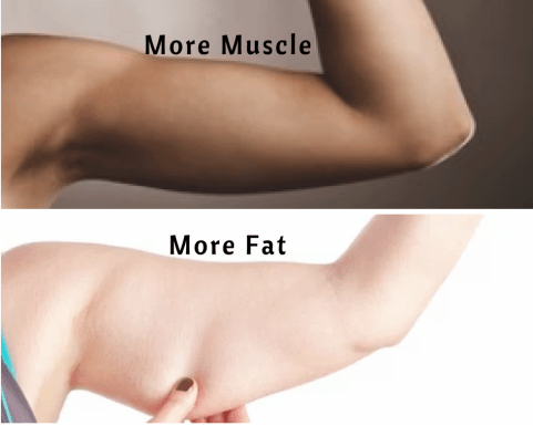 muscle n fat.png