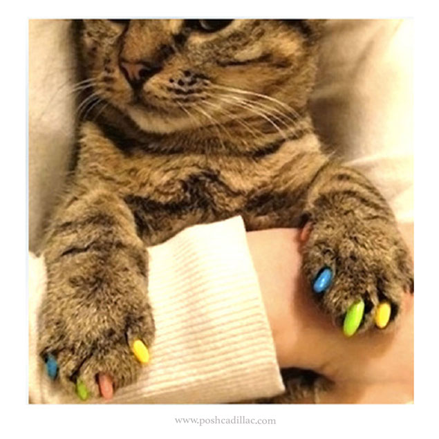 Nail Covers For Cats Reviews - The Best Cat 2018