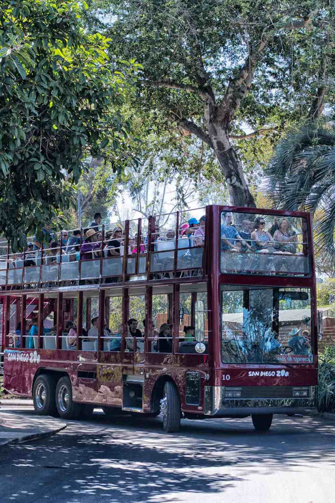san-diego-zoo-busses
