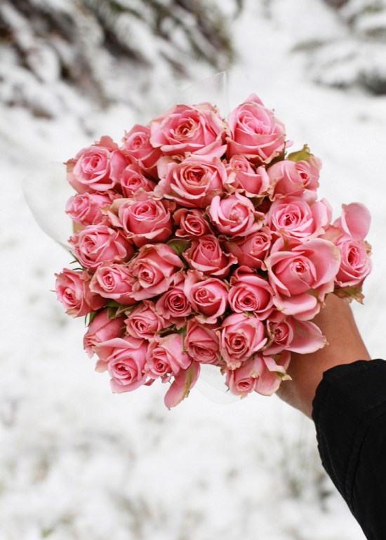Roses_Winter_Snow