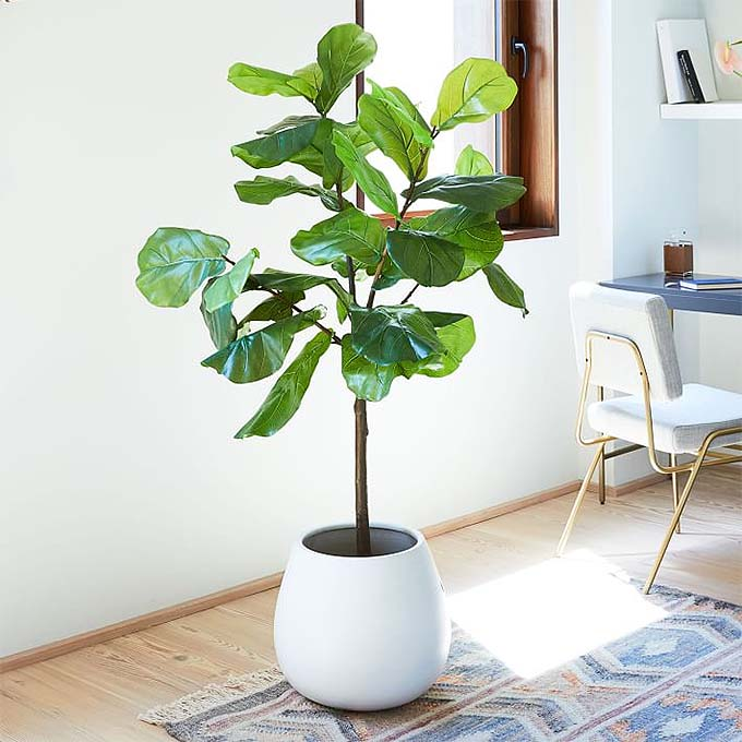 5 Faux Fiddle Leaf Fig Trees That Will Save You A Fortune Posh Pennies