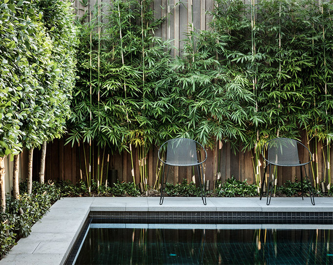 Best Artificial Bamboo Plants Perfect, Tall Potted Plants For Patio Privacy