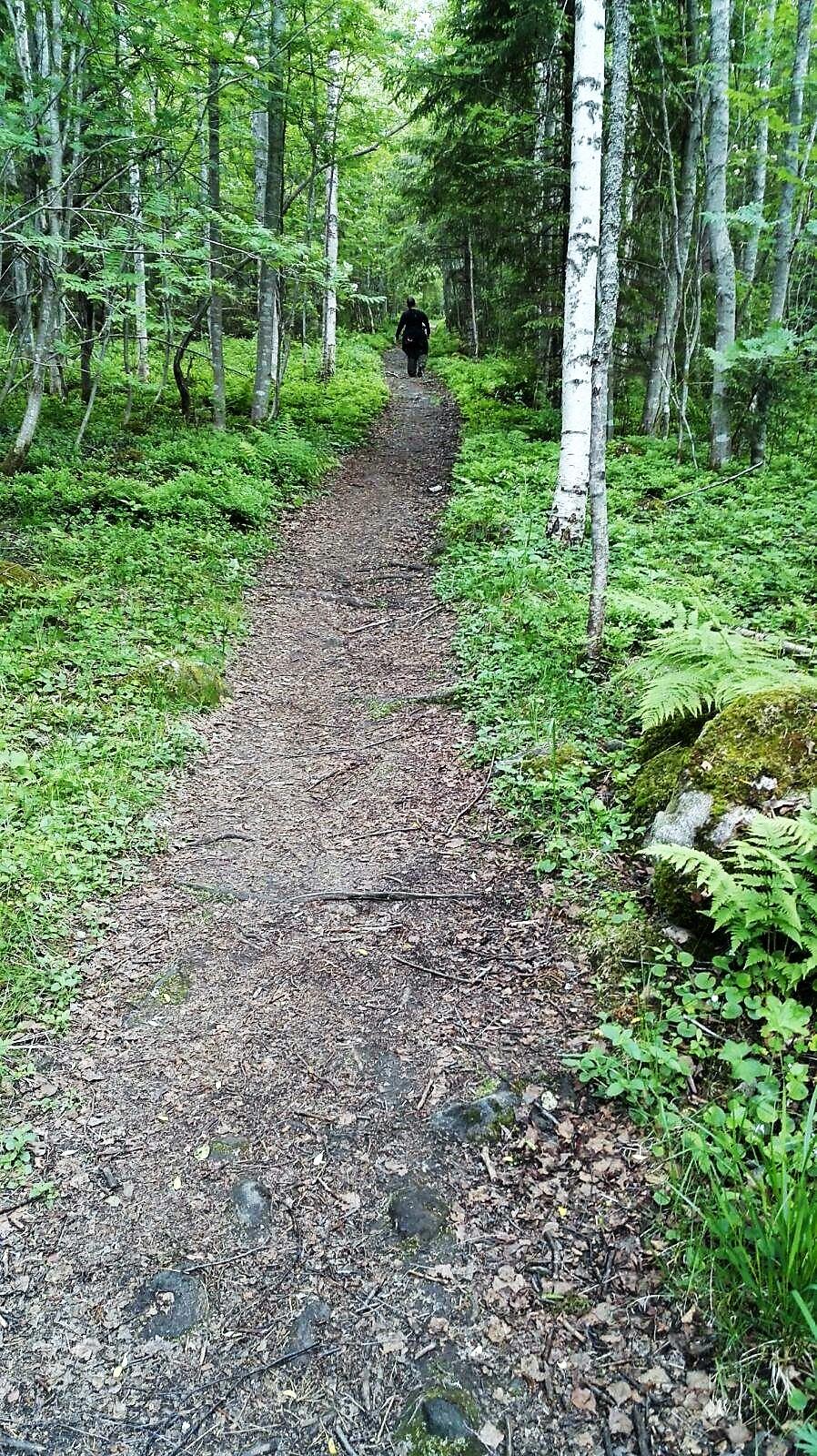 Kävely Ukko-Kolille (2)