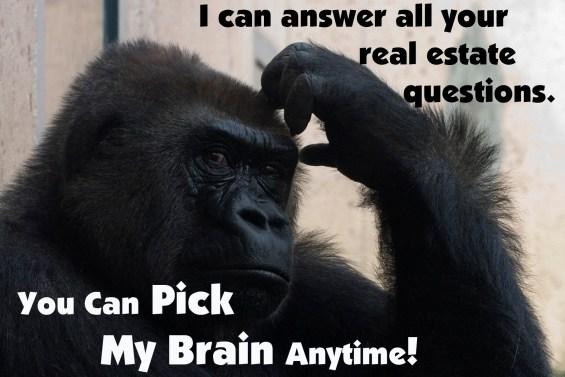 Pick My Brain Anytime