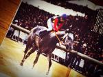 有馬記念で感じる「動物力」