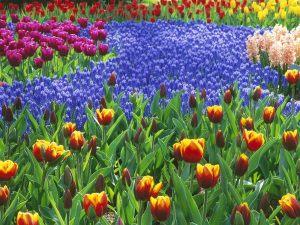 51dbd-flowergarden4