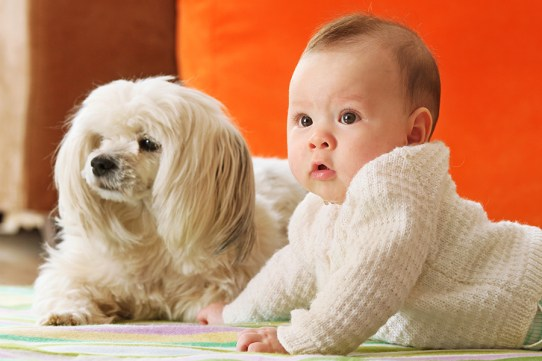 INTRODUCING DOG AND BABY Featured - 10 Reasons For Having A Dog