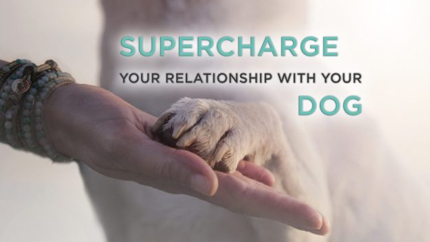 Free Webinar: Supercharge Your Relationship With Your Dog