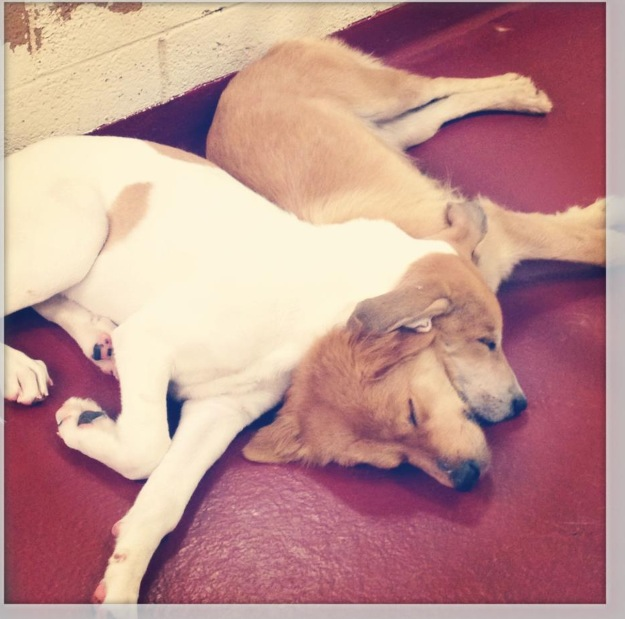 Bree and Kree at the shelter.