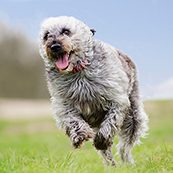 Dog Wellness