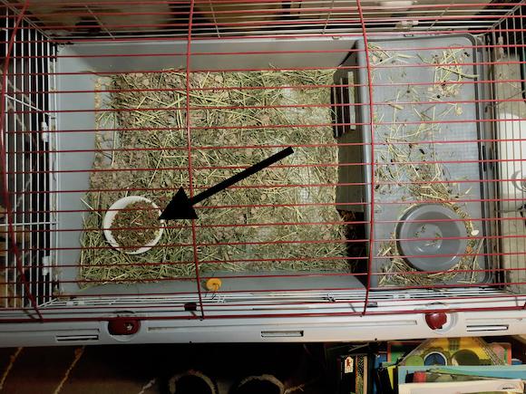 Rabbit cage blog2