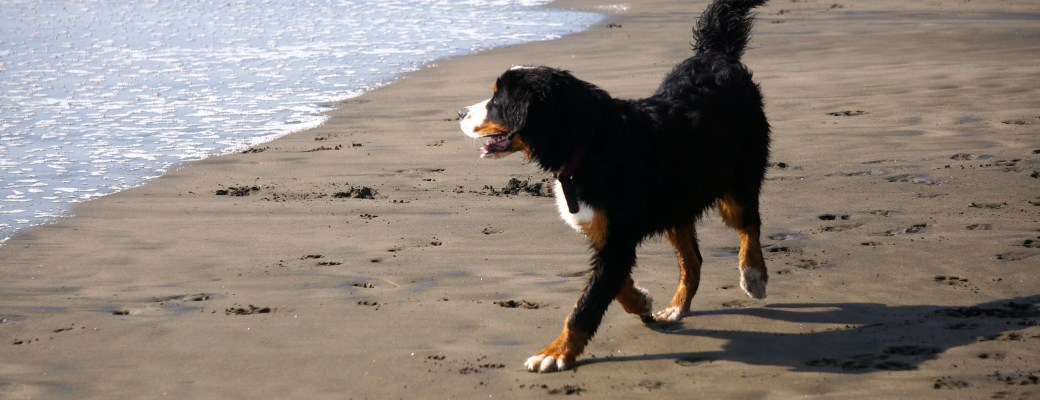 Fort Funston – A FUN Beach to Take Your Dog