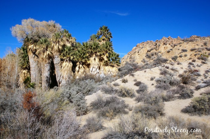 Joshua Tree National Park Oasis