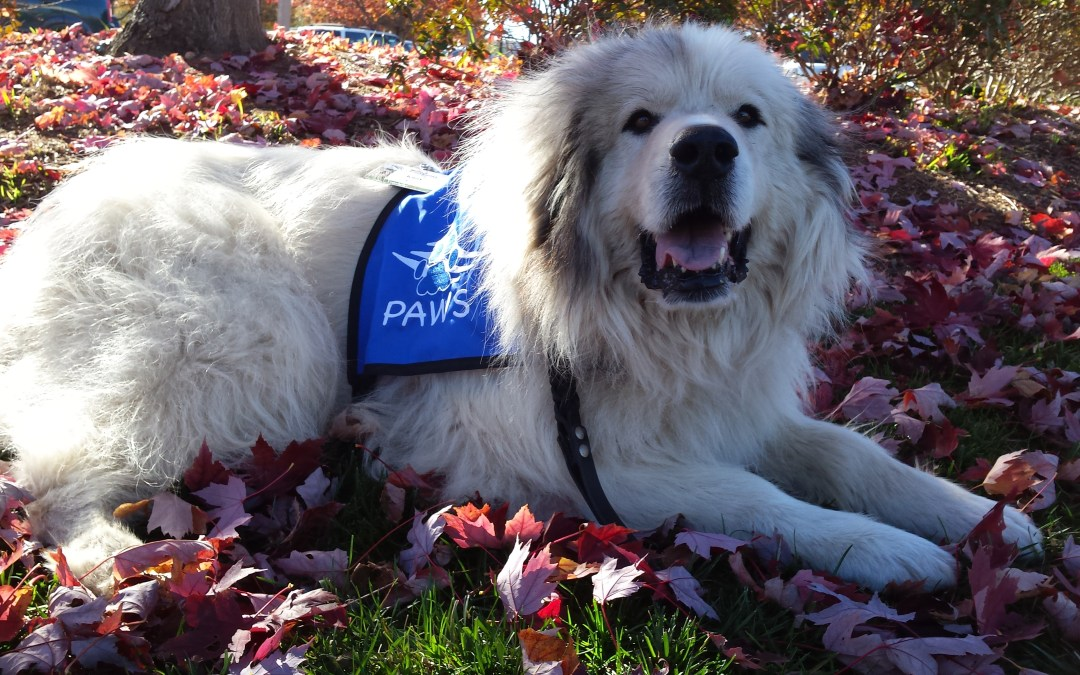 Therapy Dog  Training Classes