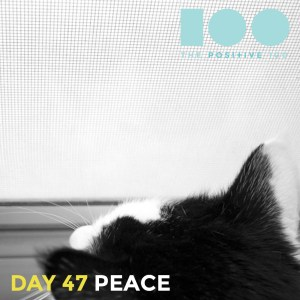 Day 47 : Peace | Positive 100 | Chronic Positivity Project