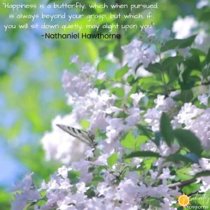 """Positive Quote #103 """"Happiness is a butterfly, which when pursued, is always beyond your grasp, but which, if you will sit down quietly, may alight upon you._ --Nathaniel Hawthorne butterfly image"""