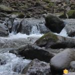 rushing river water buddha quote featured image