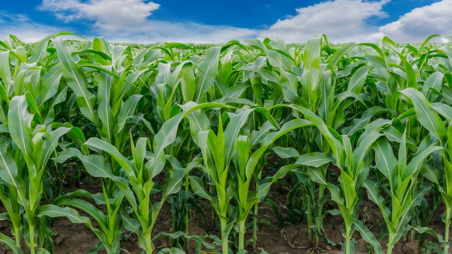agriculture-biologique-produit-autant-rapporte-plus-fibl-kenya-une