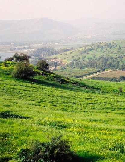 Galilee Hillside