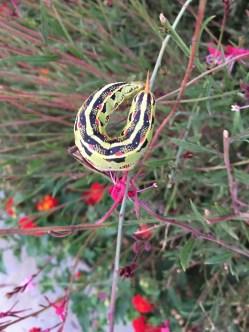 Caterpillar - 1