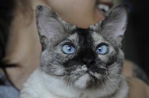 Dora the Cat.