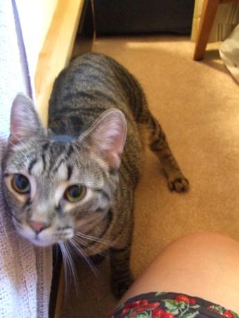 Fresh from the shelter: tiny Gina. July 2010