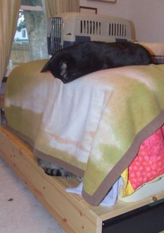 What cat? 2010