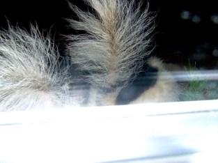 Skunk butts!