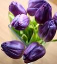 In die Küche verbannter Tulpenstrauß - sehr lila