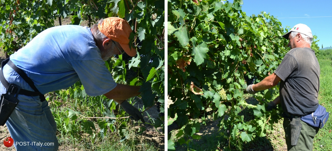 vinhos na Italia