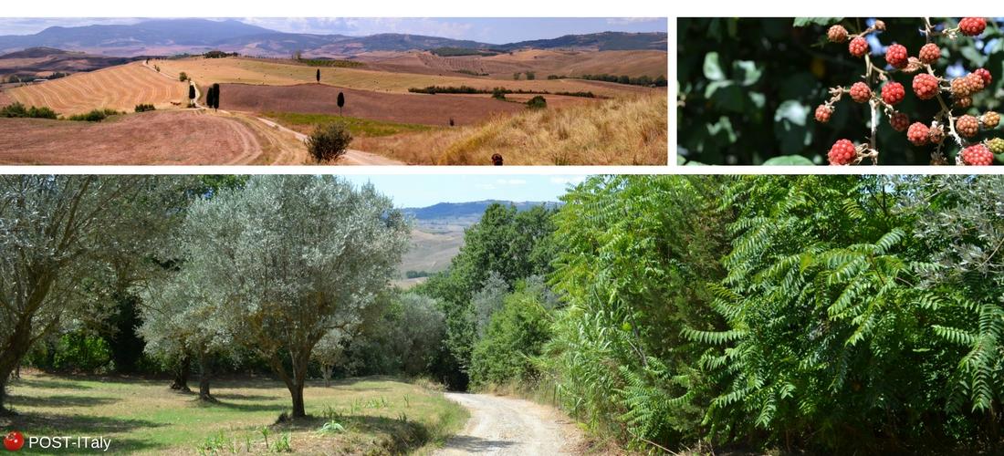 cenário do filme O Gladiador na Toscana