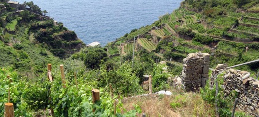 vinhos, Itália