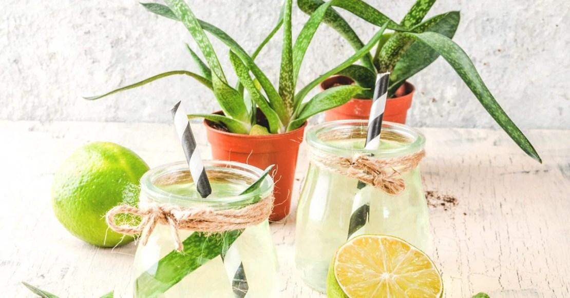 10155 9 Healthy Benefits of Drinking Aloe Vera Juice 1200x628 facebook 9:16 am