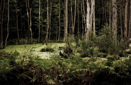Вынесли на руках из леса