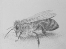 4. Silverpoint Drawing by Nick Hunter - Sheffield