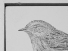9. Silverpoint Drawing by Nick Hunter - Sheffield