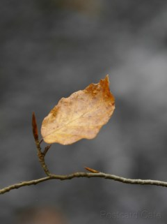 4. Time of The Season - 2014 - Autumn Leaves