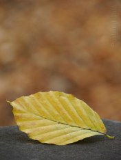 1. Time of The Season - 2014 - Autumn Leaves