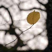 2. When I Fall, I'll Fall For You - Sheffield November 2014