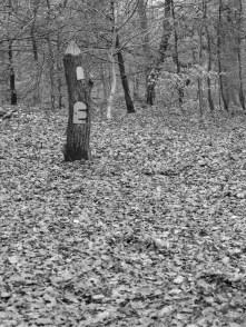 3. Woodland - November 2014