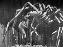 1. Spider by Phlegm, Sheffield - January 2015