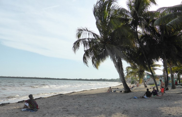 Afternoon nap under a palm on the beach.